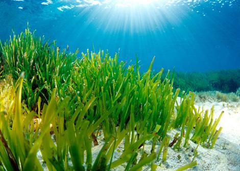 Algas y vitamina B12