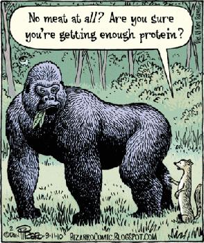 ¿De dónde obtienes las proteínas?